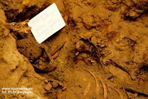 Ekshumacja szczątków w Rozmierzy