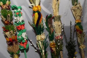 Różne kolorowe ozdobne palmy